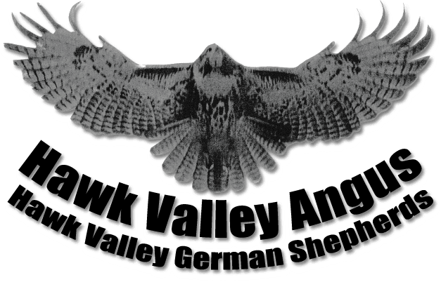Hawk Valley Angus Logo